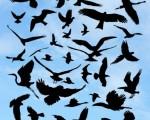 دانلود 40 براش سایه پرندگان فتوشاپ