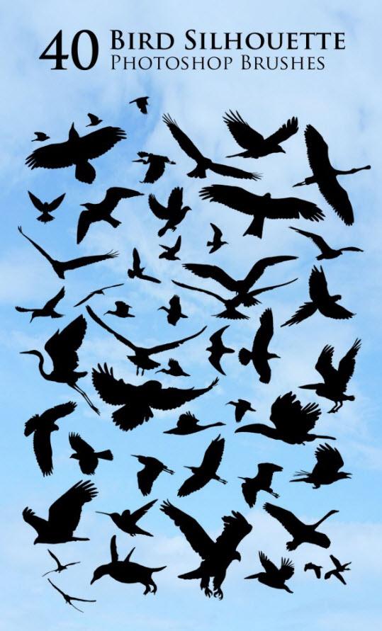 دانلود براش سایه پرندگان